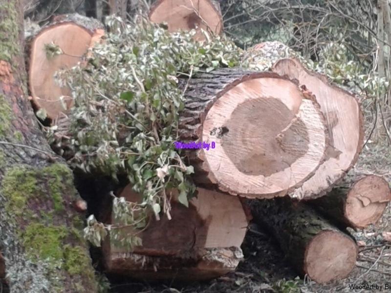 Baumstämme für Möbel