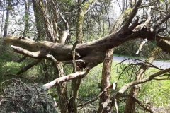 Totholz im Kieferwald