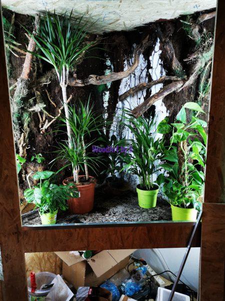 Test d. Einrichtung/Pflanzen.